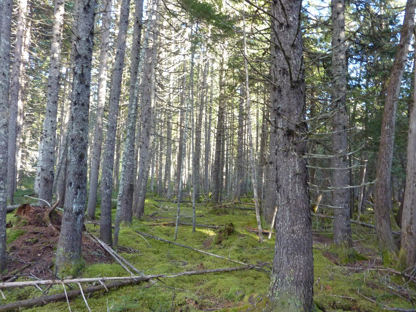 View through mature woodlands