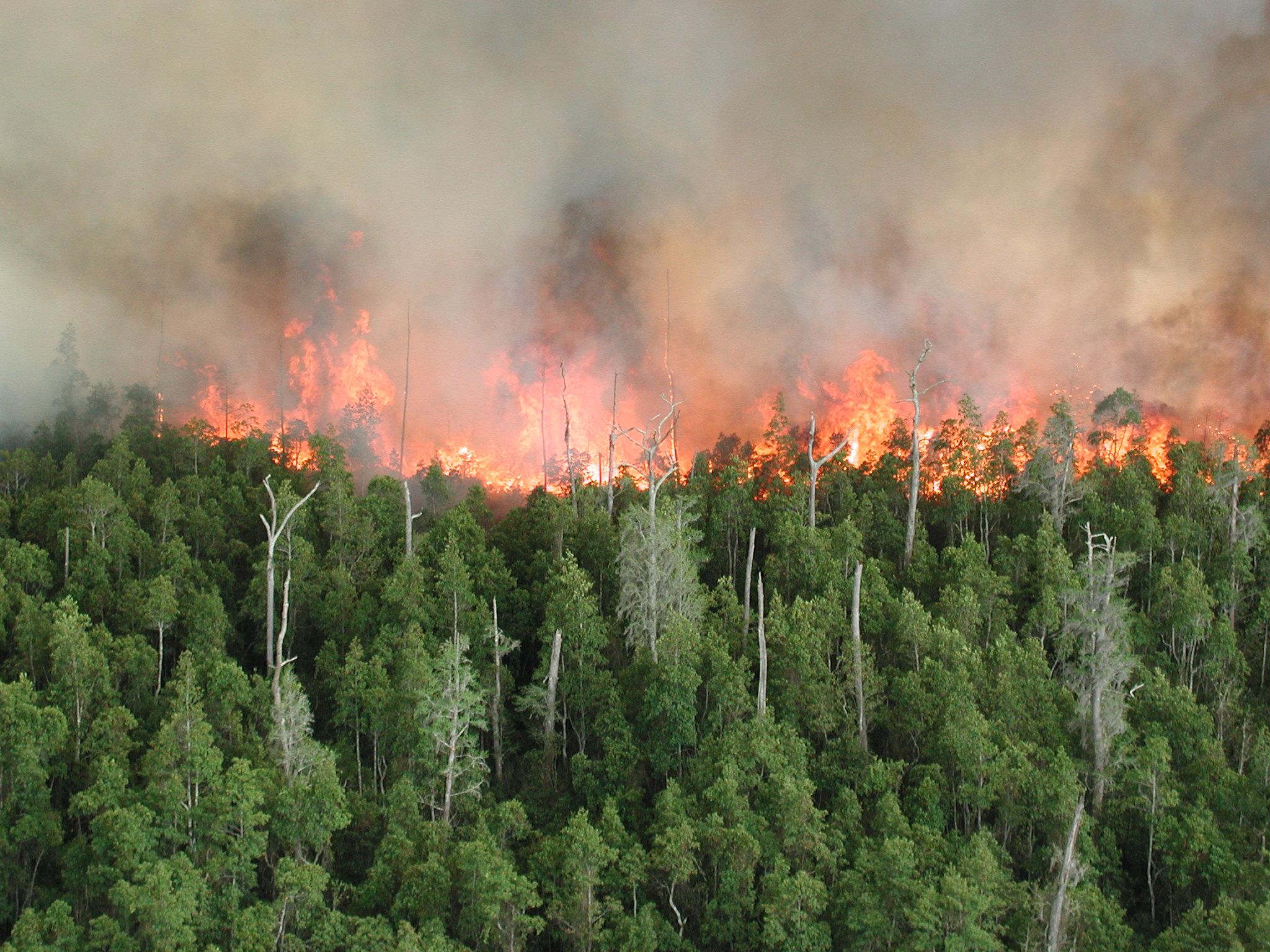 Wildfire burns forest landscape